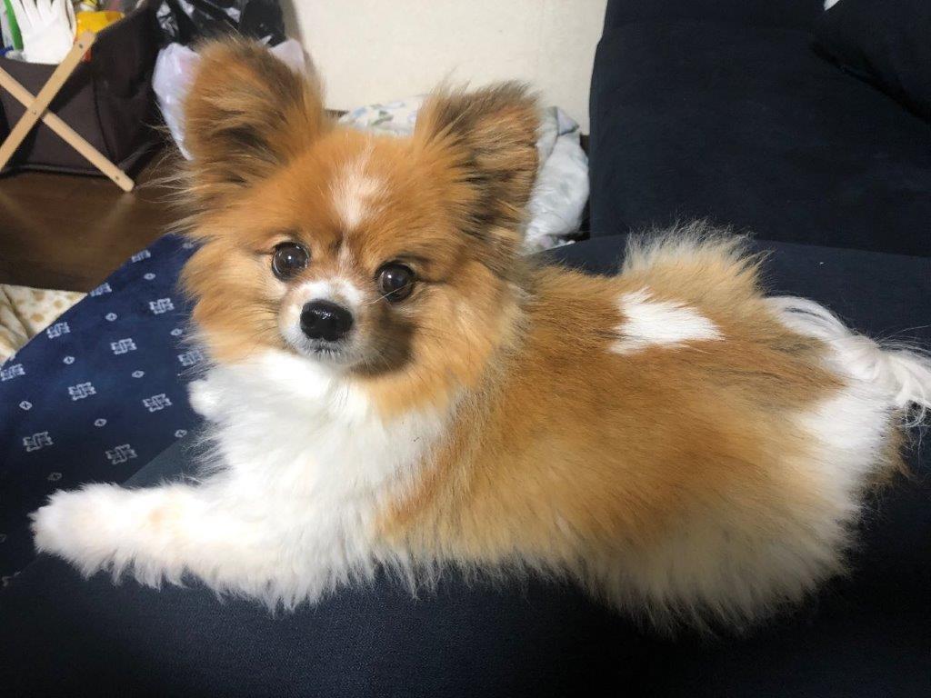 社員ブログ(E.Oより)  癒しの愛犬プリン!